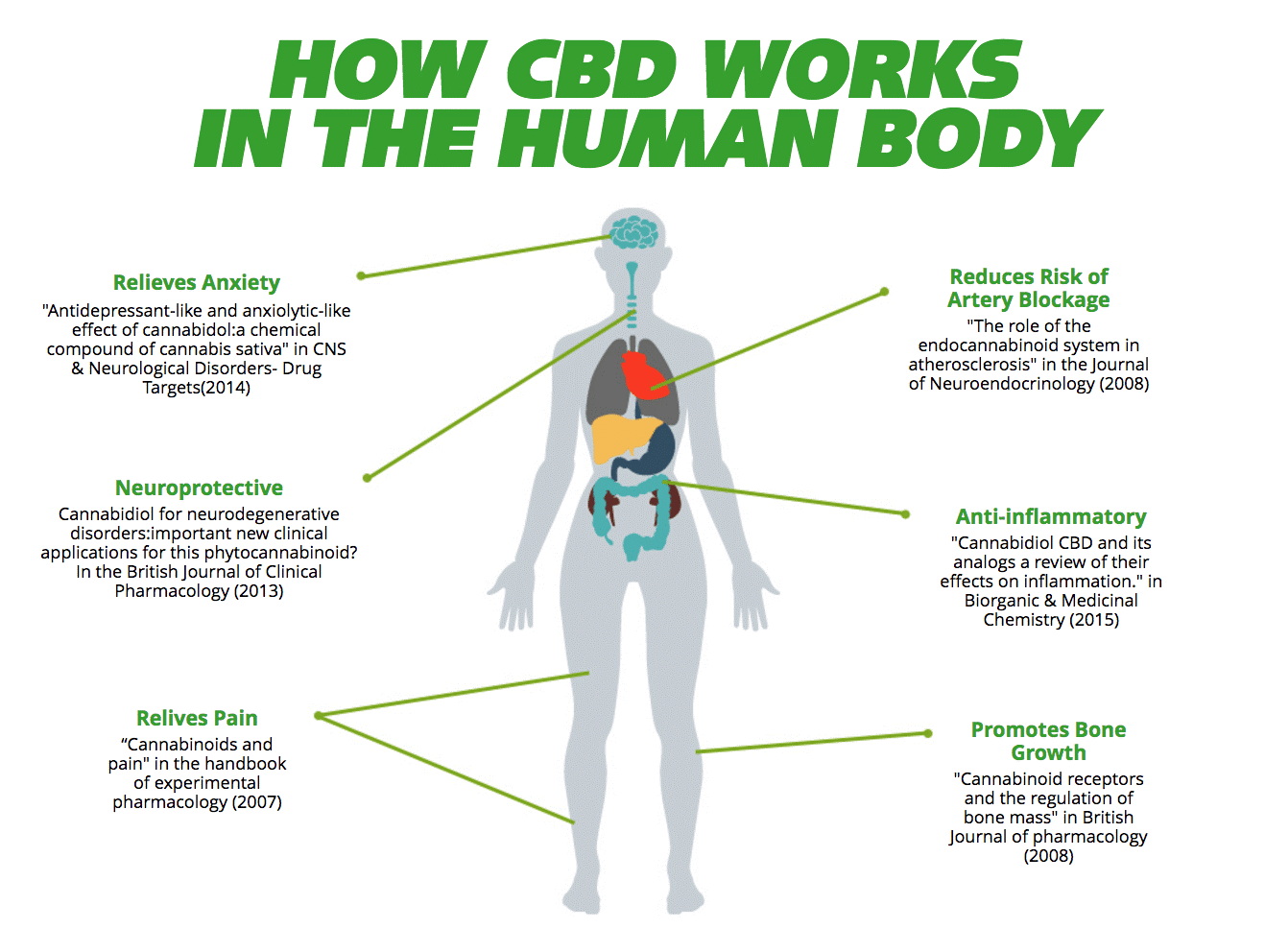 How CBD works in the Human Body.